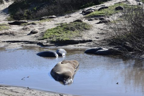 The Survivors: The Incredible Comeback of Elephant Seals
