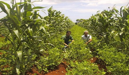 Agroecology: An Innovative Way of Farming Led by Cuba facing Climate Change